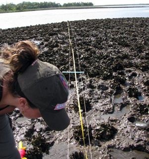 A technician measures an oyster bar in the Big Bend area of Florida.