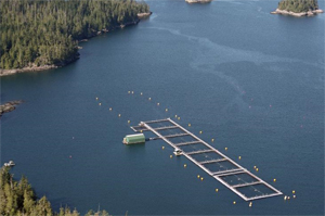 Salmon farm in British Columbia