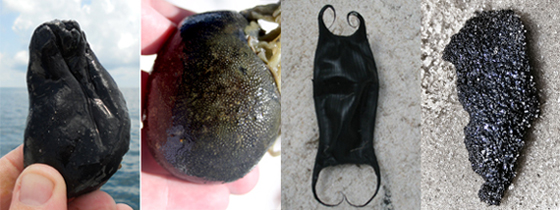 Tunicates and skate egg cases can bear a strong resemblance to tar balls.