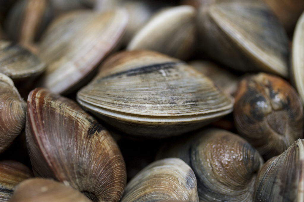 A pile of clams.