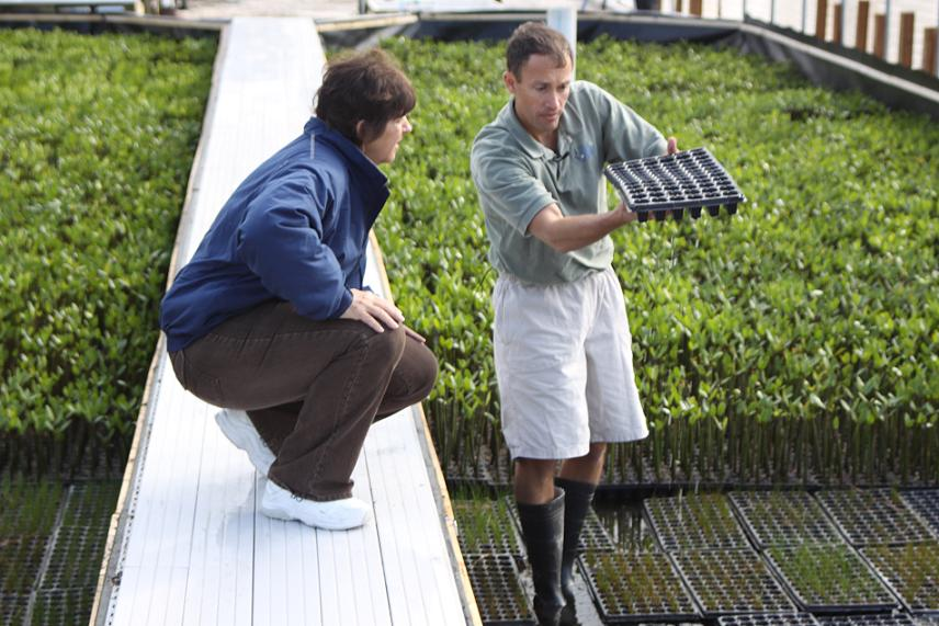 Kevan Main, Senior Scientist at Mote Marine Laboratory, participates in an coastal restoration effort in Sarasota County, Florida, using some of the plants grown in sustainable aquaponics systems at the nearby Mote Aquaculture Research Park. (Photo by Mote Marine Laboratory)