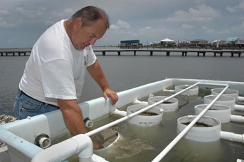 john supan inspects tanks of growing oysters