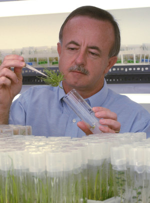 Mike Kane, a professor of environmental horticulture at the University of Florida's Institute of Food and Agricultural Sciences, inspects sea oats grown in a test tube –Friday, Oct. 29, 2004. Sea oats protect beaches from erosion, and Kane is searching for the hardiest sea oat genotypes for use in post-hurricane beach restoration projects. (Photo by Josh Wickham/University of Florida/IFAS)