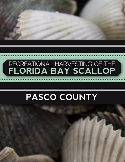scalloping pasco county
