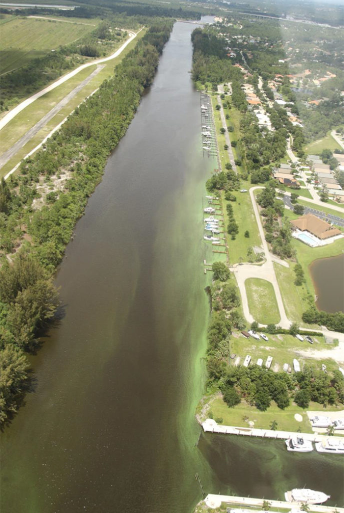c-44 canal algae bloom 2018