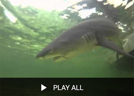 Florida Sea Grant Catch and Release Fishing Playlist