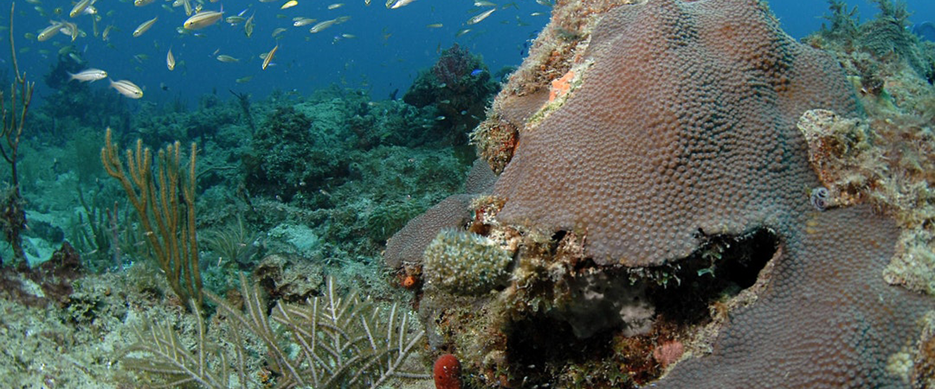 Private: Fisheries and Conservation in the Coral ECA: A Stakeholder Process