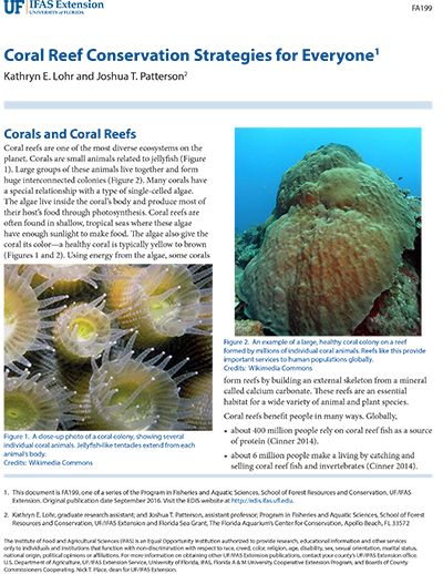 coral reef conservation strategies for everyone