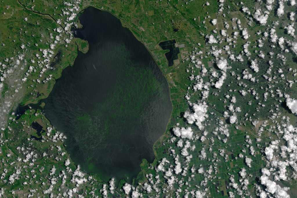 okeechobee algal bloom