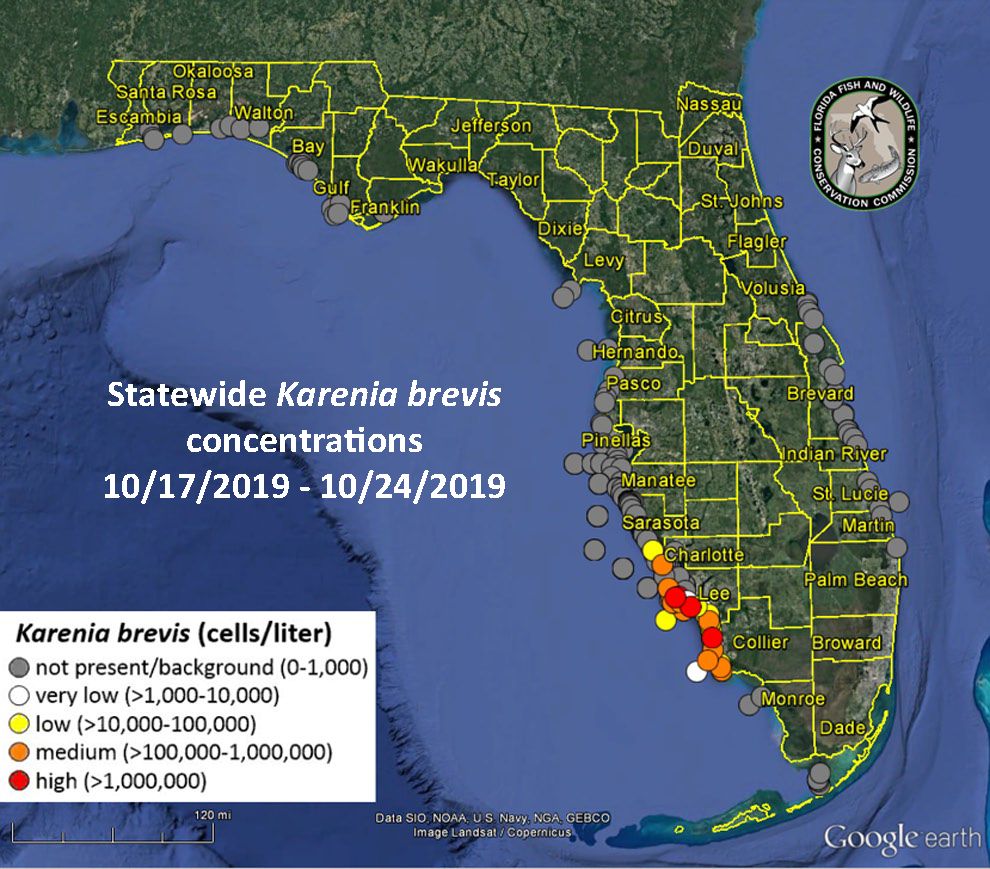 Map Of Florida Red Tide Red tide update — October 25, 2019   Florida Sea Grant