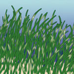 March is Seagrass Awareness Month